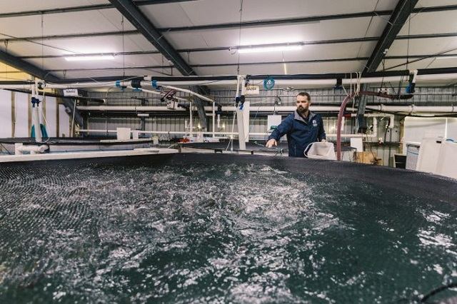 New Zealand Invests In Us 12 4 M Yellowtail Kingfish Ras Project Rastech Magazine